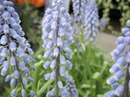 Les Fleurs de Bleu by paploothelearned