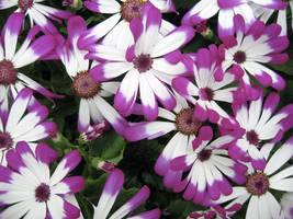 Le Fleurs de Violette by paploothelearned