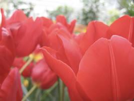 Les Fleurs de Rouge by paploothelearned