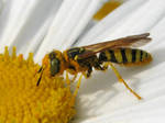 Detail of Bee Like Wasp by paploothelearned