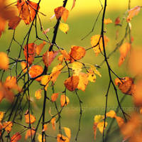 autumn jewels by Linlith