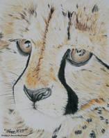 Baby Cheetah by blue5dragons
