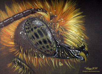Mason Bee by blue5dragons