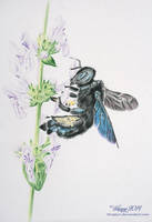 Violet Carpenter Bee by blue5dragons