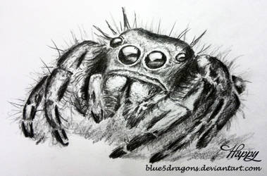 Jumping Spider by blue5dragons