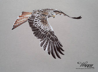 Kite by blue5dragons