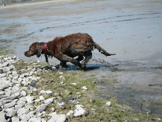 Dog In The Mud by Enforcer010