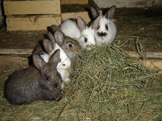 Little Rabbits by Enforcer010