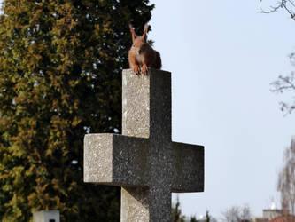 2016 - Cmentarz Brodnowski by Kejti2002