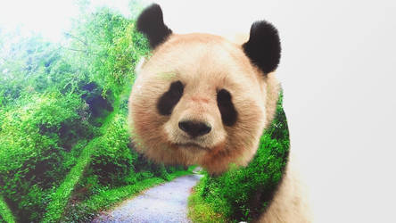 Panda tranquillity by Skyzouille