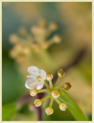 Softness by skurvash