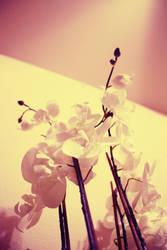 Whiteness by enotSbelaC