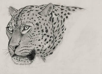 Leopard by Lapiz33