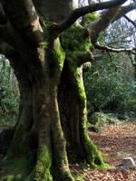 The Tree's Doorway - 1 by Bladewing-Stock