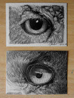 owl eye ACEO by Dom579