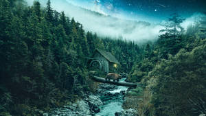 Forest by FantasyArt0102