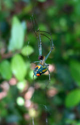 Gorgeous Spider by waterfowl