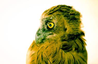 Trevas de Owl by kiekie21