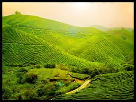 Somewhere Over The Tea by kuma-x