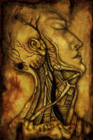 Gray's Anatomy by ruN-aliaN