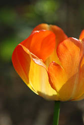 Spring flowers 3 by lawra