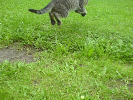 Flying cat... by mitchie-v