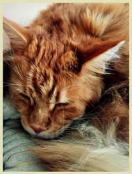 Sleeping beauty by Mrowka333