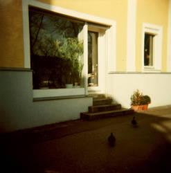 Ducks by anarchiekueken