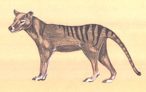 Thicklead pencil thylacine by thylobscene