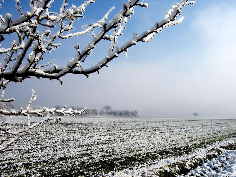 Winter Landscape by sargeaxa