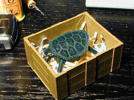 Turtle 3 by DavidStaege