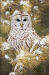 Barred Owl by gregster09