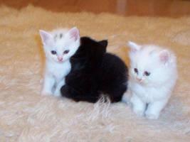 kittens x by kristina-xXx