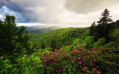 Nature Scenery by ShoespieReviews