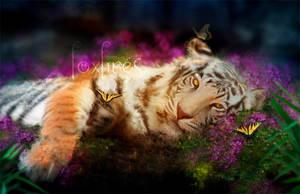 Tiger Dreams by Foxfires