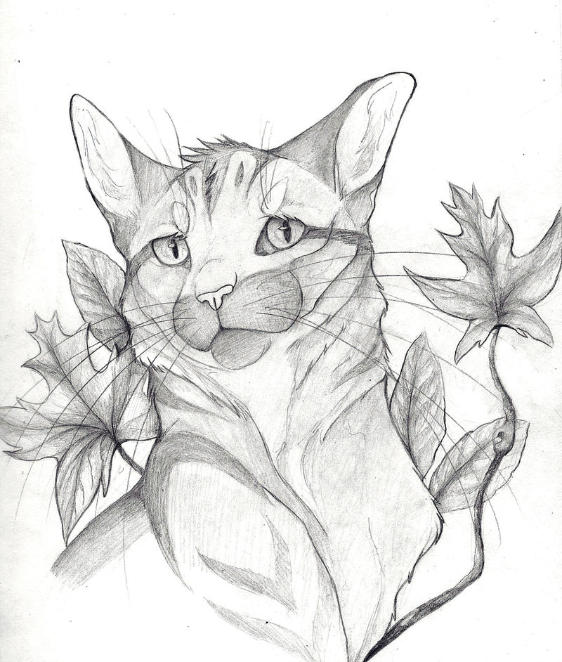 Cat 308d