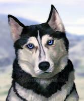 Dog of Ice by FleetingEmber