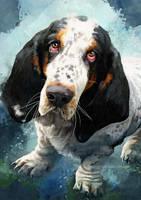 Basset Hound - Beasley by FleetingEmber