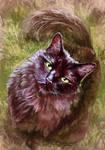 Bella - Pet Commission by FleetingEmber