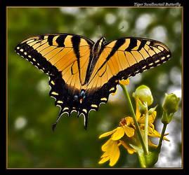 Tiger Swallowtail 07-4 by boron