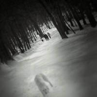 Blurry Dog by Virus69