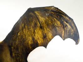 bat wing stock by babydollzombie