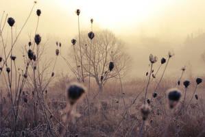 Fog's Field5. by BrittanyJanet