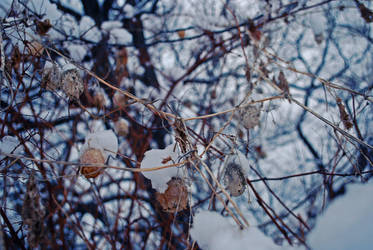 Winter Pears. by BrittanyJanet