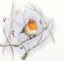 Robin--2013 by pixelstration