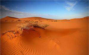 Desert II by waleed-DP