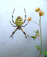 spider by greenest-alien