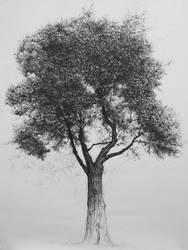 Tree No.3 by sixzero225