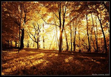 Shine Through 1 - IR by hquer