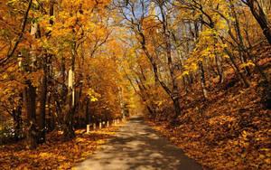 Autumn Road by hquer